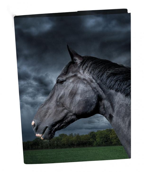 Uli Stein Heftbox Pferde, schwarz