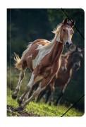 Uli Stein Foto Kunstmappe A3 Pferd, braun