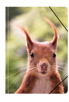 Uli Stein Foto Sammelmappe A4 Eichhörnchen