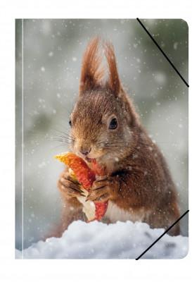Uli Stein Foto Sammelmappe A4 Eichhörnchen, Apfel